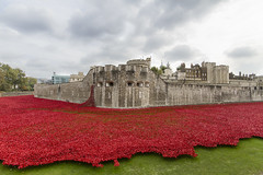 Tower of London Moat with Poppies (shacky Lancaster) Tags: london tower with wwi poppies moat toweroflondon