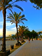 (Emily Gorvett) Tags: world life travel summer sun love amazing cool colours peace palm palmtrees ibiza colourful