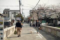 (Silvia Sala) Tags: street travel pink trees flower japan writing shopping cherry spring kyoto market traditional kanji    sakura cherryblossoms typical  kansai  giappone nihon hanami