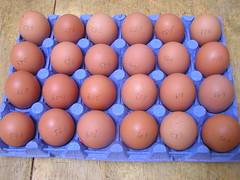 O'Dwyers Greenfield Foods Ltd 24 Medium Fresh Brown Eggs 3.99 04102014 - Box Tray Egg Weights (Lord Inquisitor) Tags: brown foods fresh eggs medium greenfield hen eggcarton eggbox eggtray odwyers heneggs eggweights 04102014