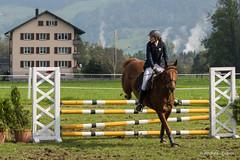 DSC05987_s (AndiP66) Tags: horse oktober macro sports sport schweiz switzerland mark sony luzern sp ii di if alpha tamron concours 77 pferd 70200 equestrian derby f28 ld horsejumping 70200mm wettbewerb 2014 springen eschenbach kantonsolothurn inwil reithof springreiten cantonsolothurn stleodegar wolhusen andreaspeters pferdespringen grueb martinameyer 77m2 a77ii ilca77m2 77ii slta77ii