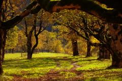 Walk into autumn (Ahornboden, Austria) (armxesde) Tags: autumn trees fall yellow austria golden tirol österreich maple pentax herbst wald ricoh eng k3 karwendel ahornboden groserahornboden infinitexposure