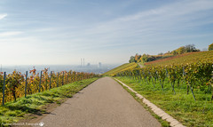 Autumn in the Hills above Neckarsulm. (andreasheinrich) Tags: morning autumn germany deutschland vineyard nikon herbst foggy hills berge morgen weinberge southgermany neckarsulm neblig d7000