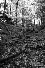 Wald | Projekt 365 | Tag 285 (MathiasK. Fotografie) Tags: project fotografie sony days tage 365 1855mm mathias wald schwarz projekt weg karner weis waldboden duundich mathiask wwwmathiaskarnerat wwwduundichphoto