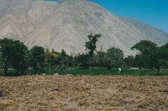 Valle de San Juan de Chorunga (Fresia Herhuay) Tags: paisaje cosecha colina montaa arequipa hacienda vaca chacra airelibre ladera vilcane chorunga