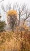 _MG_0903 (sbogden) Tags: nature treesinfog fallmorning foggyfallmorning treesinfall foggyscenery foggyfallscenery