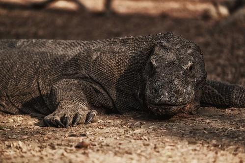 - Komodo Island -