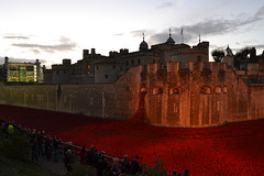 Blood Swept Lands and Seas of Red (KL's Transport Photos) Tags: red london tower blood poppies lands remembrance swept seas of