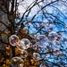 Herbstblasen