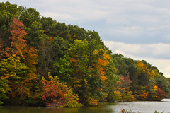 Autumn Colors in Westchester (Lojones13) Tags: auto trees lake fall colors canon eoskissx3