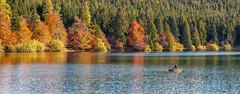 Lac du Bouchet en Haute Loire. (aups83) Tags: nature automne lac auvergne volcan pêche baignade hauteloire randonnéepédestre plandeau pêcheàlamouche cayres lacdubouchet plateauvolcanique