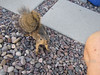 IMG_8554-copy (Claudio Vázquez @ cvphotoart) Tags: california squirrel zen canonsx20is