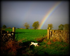 Lomo Rainbow Dog (Simon Corble) Tags: morning autumn england dog walking landscape morninglight nationalpark rainbow lomo october hiking derbyshire peakdistrict meadows running gateway fields spaniel springer springerspaniel lomoeffect lomoish dili whitepeak derbyshiredales peakdistrictnationalpark autumnlight monyash limestonewalls
