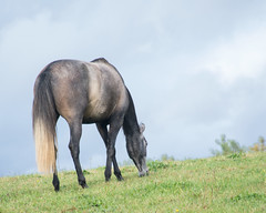 graze (bambe1964) Tags: autumn sky horse fall grass andalusian