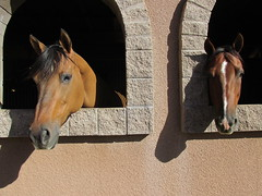 Horses looking out of their stall windows at Los Cedros in Scottsdale, Arizona (Nancy D. Brown) Tags: arizona horses scottsdale loscedros