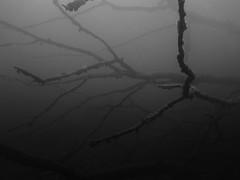 Tree, Schmaler Luzin, Feldberg (yayapapaya77) Tags: lake tree leaves germany see underwater branches diving ste bltter baum feldberg mecklenburgvorpommern tauchen unterwasser schmalerluzin feldbergerseenlandschaft canonpowershotg15