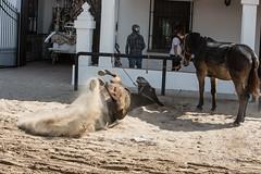 AE5D0865 (alonsoesparterofoto) Tags: caballo alma imagenes alonso rocio ermita bombo flamenca buey flauta gitana romeria campero botos tamboril bueyes rociero carriola simpecado tamborilero espartero rociera gibraleon sinpecado alonsoespartero