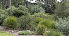 Garden lover's palette (idunbarreid off / on) Tags: greenery