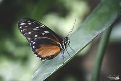 Papillons (marine_calais) Tags: papillons serres tropicale couleurs magnifique fleurs