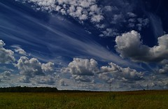 Arrows and white horses (МирославСтаменов) Tags: russia moscowregion pushchino field meadow sky cirrus cumulus cloudscape summer