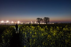 5:41am (Rob Pitt) Tags: sunset field wirral ellesmere port eastham landscape outdoor serene grass rapeseed oil refinery morning sunrise trees lightpainting