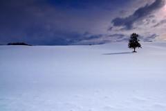Lonely tree (I like PENTAX.) Tags: tress snow winter white green landscape sun weather village dusk cloud pentaxart