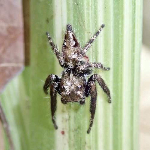 garden spider in Chiang Mai, Thailand