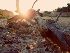 Over time / El paso del tiempo (LUiS AFB) Tags: rama branch atardecer sunset sol sun cielo sky mainland tierra piedras stones naturaleza nature