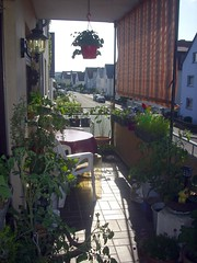 image032 (i_am_charliekay) Tags: nature gardening balcony selfgrown homegrown vegetables veggies flowers tomato tomatoes zuccini pepper peppers pumpkin animals green balconylife