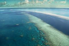 Coral reef II (Josué Godoy) Tags: coral reef arrecife recif australia mar mer sea azul bleu blue