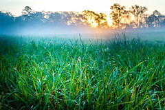 Morning Grass (Photigrapher) Tags: grass water mist dew meadow sunrise south carolina sc d3200 nikon landscape sun shine green fog morning dawn farm field