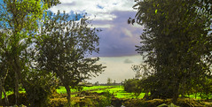 DSC04747 (abdallah awdallah) Tags: egypt cairo green sky blue sony 1855mm a57 tree landscape photography