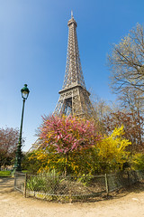 Eiffel Tower in Spring (photo.amateur78) Tags: spring printemps eiffeltower paris îledefrance france fr toureiffel canon5dmarkiv fleurs flower