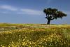 Monte das Vinhas_9bd (x-lucena) Tags: alentejo azinheira quercusilex montedasvinhas