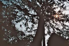 (Germaine Pötgen) Tags: tree sun temple cambodia siem reap angkor wat sky nature moody mood analog analogue minolta film travel 35mm