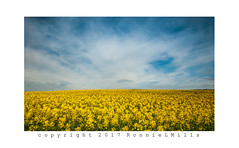 Keepin' It Simple (RonnieLMills) Tags: blue sky clouds yellow rapeseed field county down countryside rothko