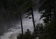 Crue de la Rivière Ouareau tout juste avant les Chutes Dorwin (bd168) Tags: nature eau rivières forêt chutes falls water spring printemps xt10 xf1855 forest river waterfall trees arbres
