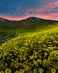 Carrizo Sunrise (rootswalker) Tags: carrizoplains wildflowers sunrise clouds burn
