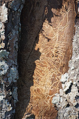 Under the Bark #2 (A.Maltese) Tags: bark tree insect nature lichen pattern