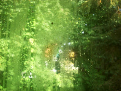 A tiny bug on the window Oct 13-2014 (Nelley) Tags: autumn green bug insect droplets drops dew leafs windowdew