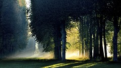 (Marie.L.Manzor) Tags: travel autumn sunset mist france fall nature backlight forest sunrise landscape geotagged countryside nikon atmosphere versailles frame chateaudeversailles colorfulsunset parcdeversailles marielmanzor nikon610 gettyimagecollection