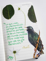 RUMI : ) (Milagritos9) Tags: hojas handwrittenjournal artistdiary moleskinecollage illustratedquote starlingbird birdjournal blessingquote rumiquotes diarioilustrado moleskineartpages moleskinebirdsjournal moleskinediary2014 artistillustratedjournal leafquote