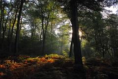 Derriere un arbre (StephanExposE) Tags: soleil sun forest forêt forêtdelaigue compiègne oise france arbre tree fougère rayon rayondusoleil automne autum canon 600d 1855mm stephanexpose