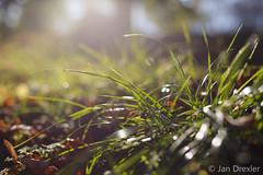 Herbst-5813 (JD-PhotoArt) Tags: november green rot canon germany deutschland golden licht jan bokeh herbst natur gelb nrw grn braun makro blatt sonne farben photograpy 6d 2014 drexler dren llense