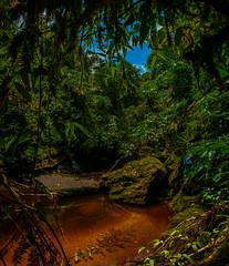 Bosc (faltimiras) Tags: park parque forest waterfall colombia natural selva jungle parc andi cova cascada bosc cueva guacharos pitalito