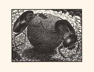 Escher - Scarabei