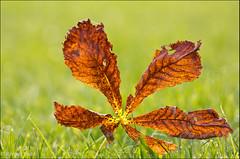 Autumn (jvind) Tags: autumn canon dahl 70200mm efterr jvind 60d