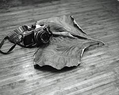 Diamond & Leaf (<Pirate>) Tags: life lighting camera love film monochrome wonderful blackwhite leaf still nikon failure large diamond malaysia ambient hp5 format 1977 fm ilford schneider 125 kreuznach reciprocity ro9 47135