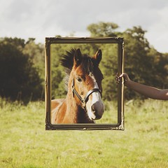 College Work (AmyyJG) Tags: horses horse photoshop canon surrealism manipulation pony frame 7d ponies manip equestrian equine horseriding equus horserider cs6 equinephotography equestrianphotography canon7d photoshopcs6 littleluskerphotoshopactions