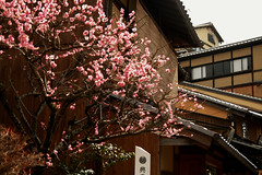 Gion  (Silvia Sala) Tags: old city trip travel flowers houses tree travelling tourism japan cherry town wooden spring ancient kyoto asia blossom sightseeing culture    sakura  cherryblossoms gion tradition  orient giappone blooming  historicalcenter